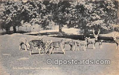yan060063 - New York Zoological Park, USA Axis Deer Herd Postcard Post Card