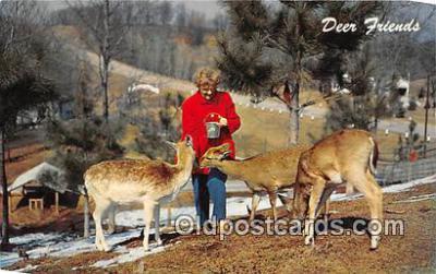 yan060068 - Deer Friends Postcard Post Card