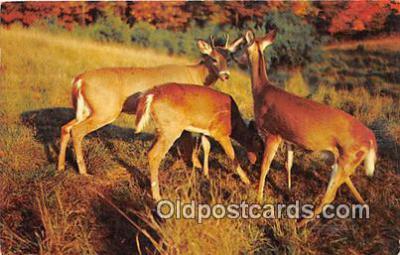 yan060070 - Main, USA  Postcard Post Card