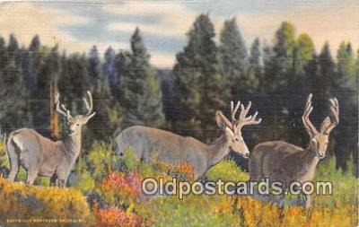 yan060077 - Three Little Deers Postcard Post Card