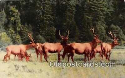 yan060078 - California, USA Prairie Creek State Park Elk Preserve Postcard Post Card