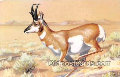 yan060083 - Painted by Maynard Reece Pronghorn Antelope Postcard Post Card