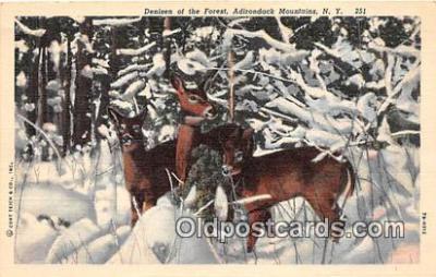 yan060087 - Adirondack Mountains, NY, USA Denizen of the Forest Postcard Post Card