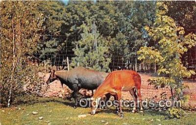 yan060093 - Catskill, NY, USA Blue Buck, Catskill Game Farm Postcard Post Card
