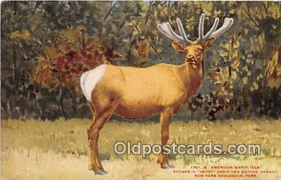 yan060108 - New York Zoological Park, USA American Wapiti Elk Postcard Post Card