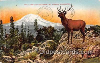 yan060112 - Mt Rainer, Washington, USA Twon Sentinels Postcard Post Card