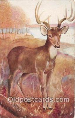 yan060126 - Artist Harvey Virginia Deer Postcard Post Card