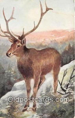 yan060128 - Artist Harvey American Elk or Wapiti Postcard Post Card
