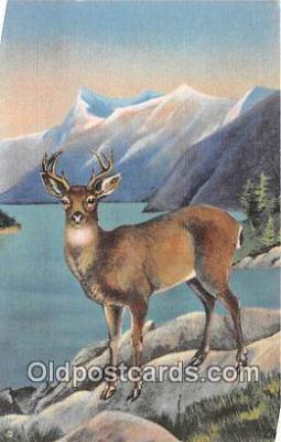 yan060132 - Alaska Blacktail Deer Postcard Post Card