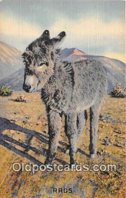 yan070006 - Rags Postcard Post Card