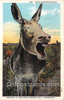 yan070009 - Rocky Mountain Canary Postcard Post Card