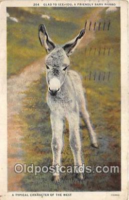 yan070012 - Baby Burro Postcard Post Card