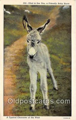 yan070018 - Baby Burro Postcard Post Card