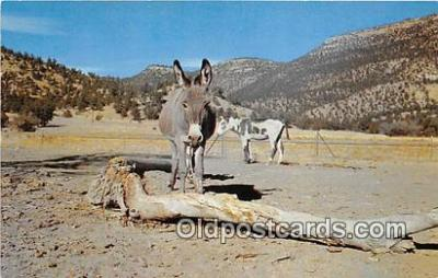 yan070047 - Color by Lee Caskey Democrats Postcard Post Card