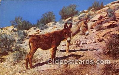 yan070057 - Sweethearts of the Desert Postcard Post Card