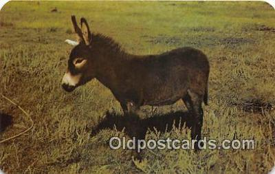 yan070061 - Baby Burro Postcard Post Card