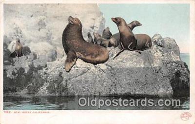 yan080007 - California, USA Seal Rocks Postcard Post Card