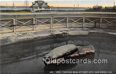 yan080010 - San Diego, CA, USA Ben, Old Seal, Tent City Postcard Post Card