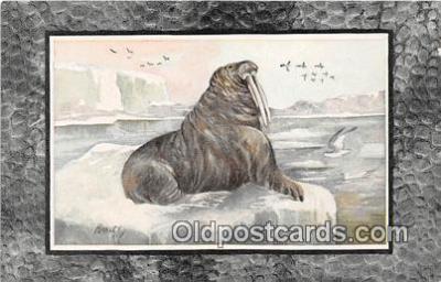 yan080013 - Walrus Postcard Post Card