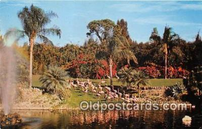 yan090005 - Parrot Jungle, FL, USA Graceful Flamingos Postcard Post Card