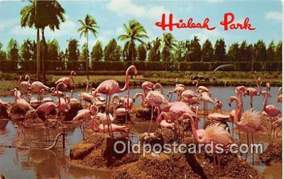 yan090020 - Hialeah, FL, USA Hialeah Park Postcard Post Card