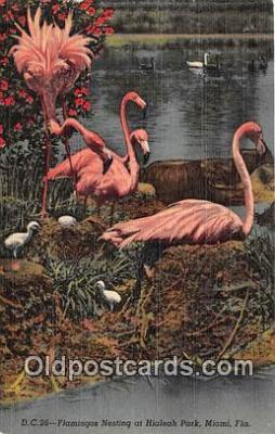 yan090029 - Hialeah Park, Miami, FL, USA Flamingo Nesting Postcard Post Card
