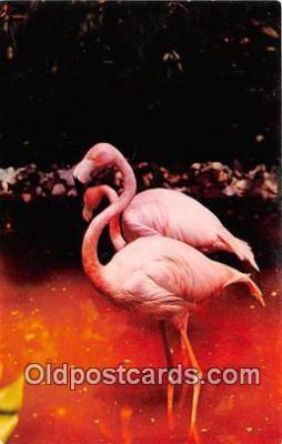 yan090032 - Flamingos Postcard Post Card