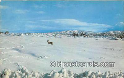yan100001 - Rabbits Postcard Post Card