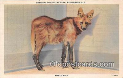 yan100006 - Washington DC, USA Maned Wolf, National Zoological Park Postcard Post Card