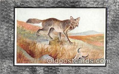 yan100011 - Harvey Coyote or Prairie Wolf Postcard Post Card