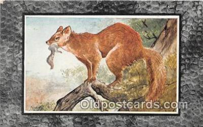 yan100015 - American Sable or Marten Postcard Post Card