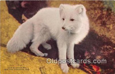 yan100017 - New York Zoological Park, USA Arctic Fox Postcard Post Card