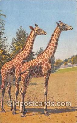 yan110005 - Postcard Post Card