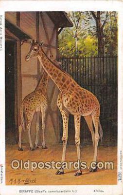 yan110010 - Afrika Giraffe Postcard Post Card