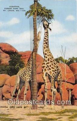yan110018 - St Louis, MO, USA Giraffes, Forest Park Zoo Postcard Post Card