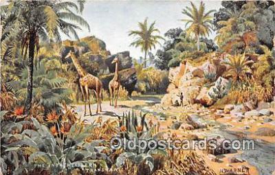 yan110020 - North Eastern Transvaal Postcard Post Card