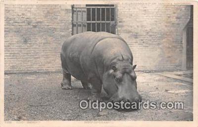 yan130015 - Hippopotamus Postcard Post Card