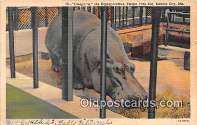 yan130017 - Kansas City, Missouri, USA Cleopatra, Hippopotamus, Swope Park Zoo Postcard Post Card