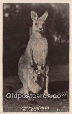 yan140002 - Koala Park, Sydney Kangaroo & Young Postcard Post Card