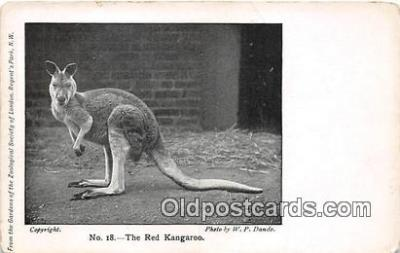 yan140012 - Regents Park, NW Red Kangaroo Postcard Post Card