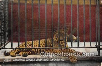 yan150011 - Chicago, IL, USA Leopards Lincoln Park Zoo Postcard Post Card