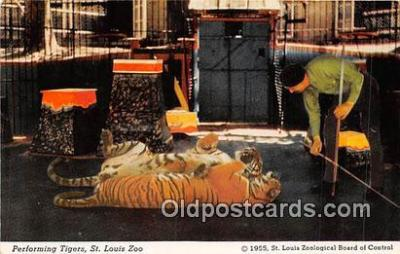 yan150016 - St Louis, MO, USA Performing Tigers, St Louis Zoo Postcard Post Card