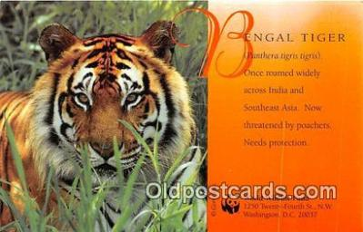 yan150020 - Washington DC, USA Bengal Tiger, World Wildlife Fund Postcard Post Card