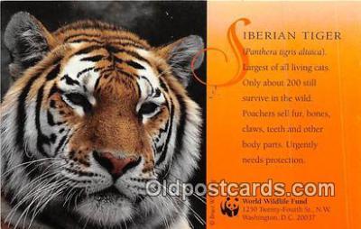 yan150023 - Washington DC, USA Siberian Tiger, World Wildlife Fund Postcard Post Card