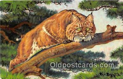 yan150024 - Painted by Fred Everett Bobcat Postcard Post Card