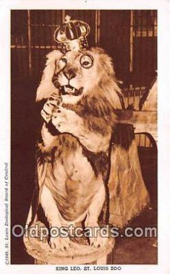 yan150045 - St Louis, MO, USA King Leo, St Louis Zoo Postcard Post Card