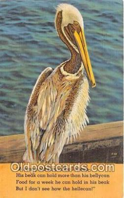 yan170002 - Pelican Postcard Post Card