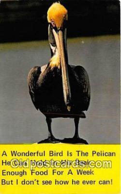 yan170003 - Pelican Postcard Post Card