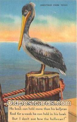 yan170005 - Texas, USA Pelican Postcard Post Card