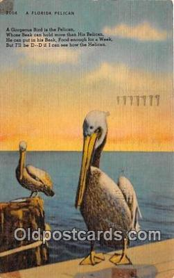 yan170008 - Florida, USA Pelican Postcard Post Card
